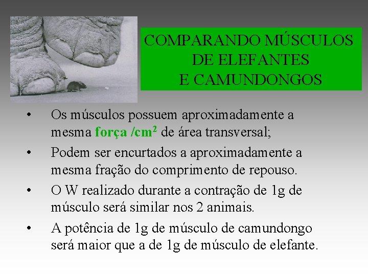 COMPARANDO MÚSCULOS DE ELEFANTES E CAMUNDONGOS • • Os músculos possuem aproximadamente a mesma
