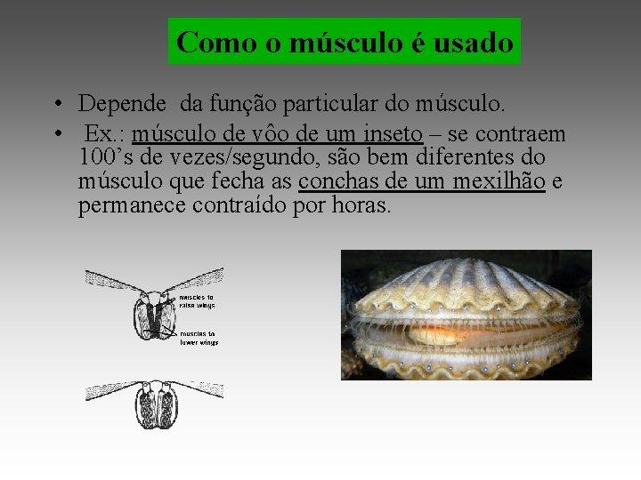 Como o músculo é usado • Depende da função particular do músculo. • Ex.