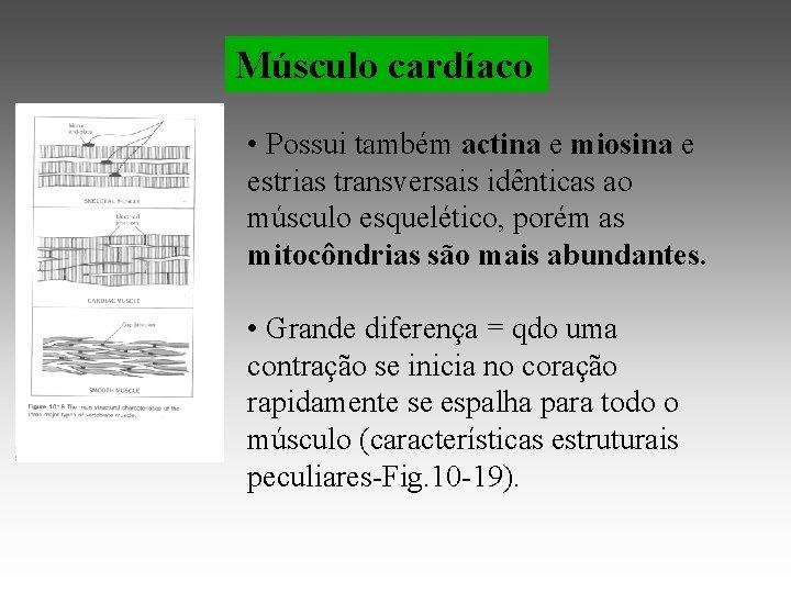 Músculo cardíaco • Possui também actina e miosina e estrias transversais idênticas ao músculo