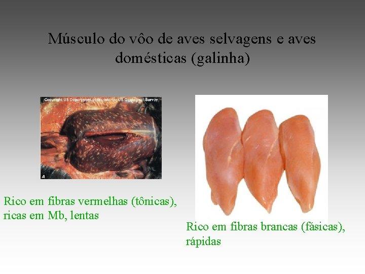 Músculo do vôo de aves selvagens e aves domésticas (galinha) Rico em fibras vermelhas