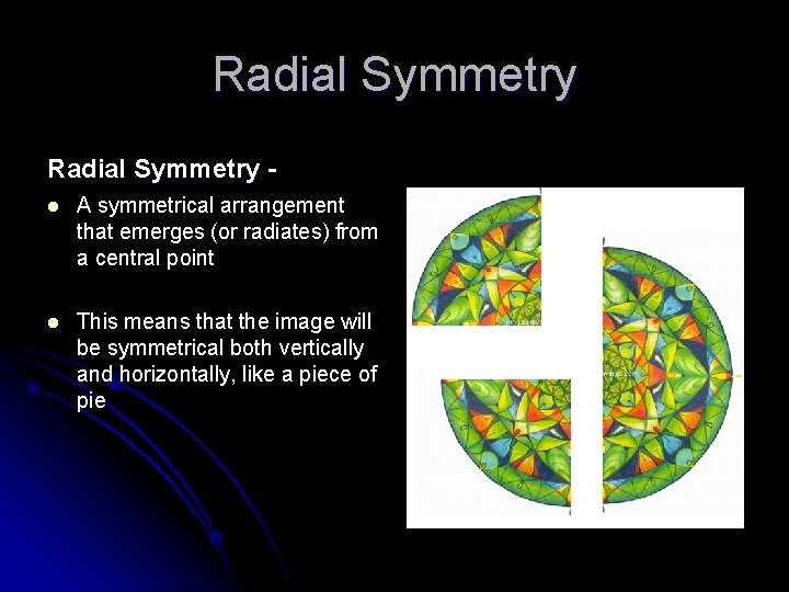 Radial Symmetry l A symmetrical arrangement that emerges (or radiates) from a central point