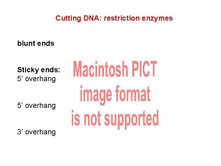 Cutting DNA: restriction enzymes blunt ends Sticky ends: 5' overhang 3' overhang