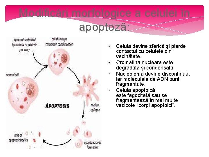 Boala mieloproliferativă
