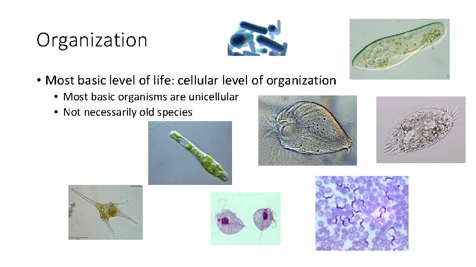 Organization • Most basic level of life: cellular level of organization • Most basic