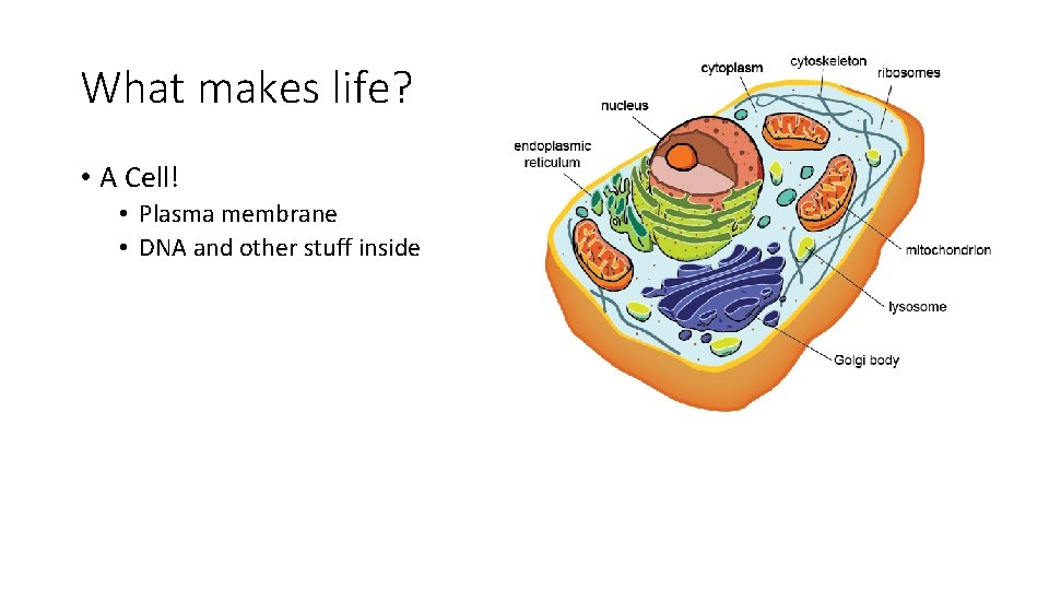What makes life? • A Cell! • Plasma membrane • DNA and other stuff