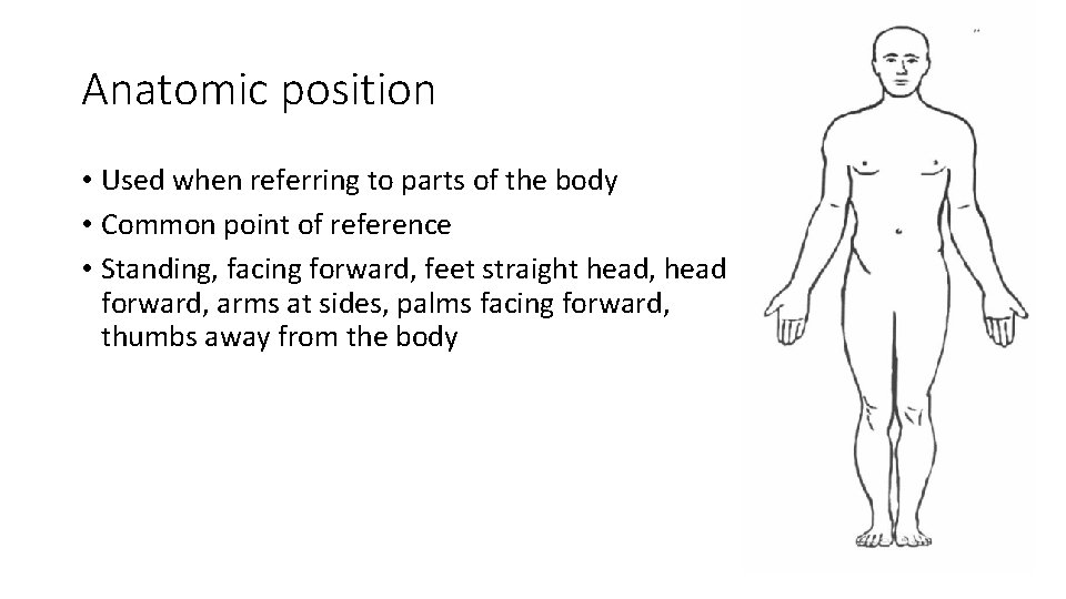 Anatomic position • Used when referring to parts of the body • Common point