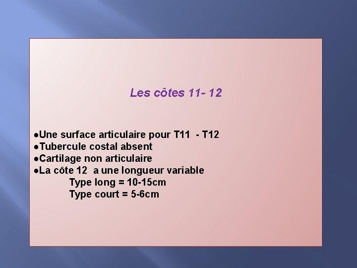 Les côtes 11 - 12 ●Une surface articulaire pour T 11 - T 12