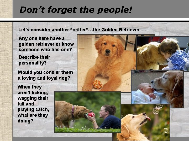 """Don't forget the people! Let's consider another """"critter""""…the Golden Retriever Any one here have"""