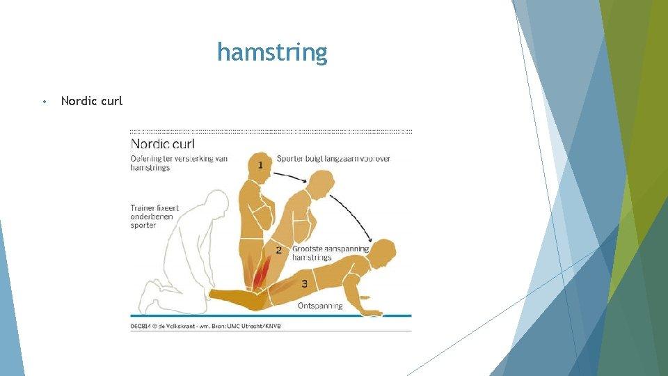 hamstring • Nordic curl