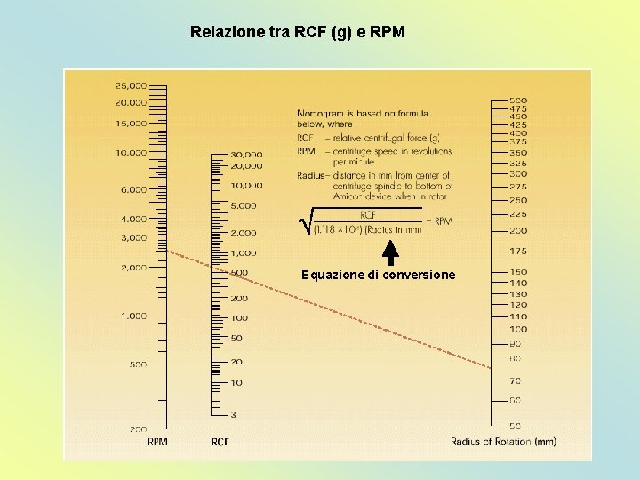 Relazione tra RCF (g) e RPM Equazione di conversione
