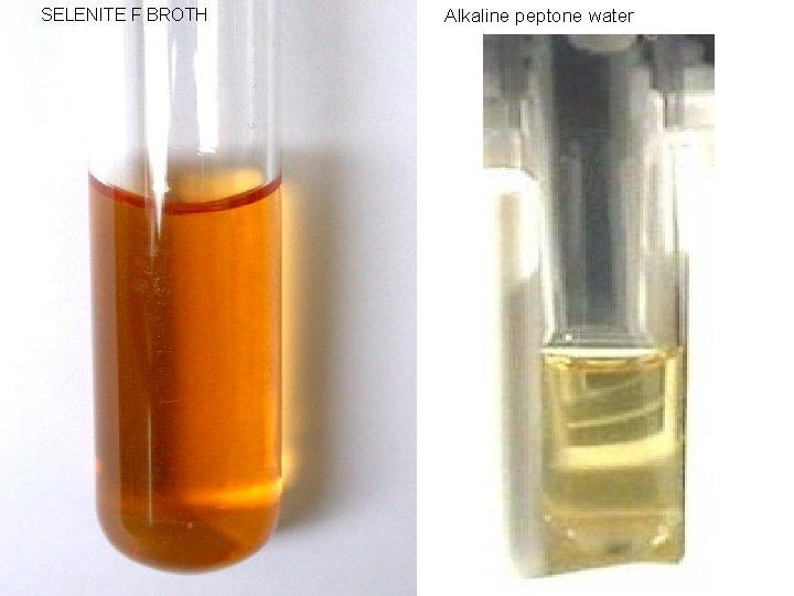 SELENITE F BROTH Alkaline peptone water