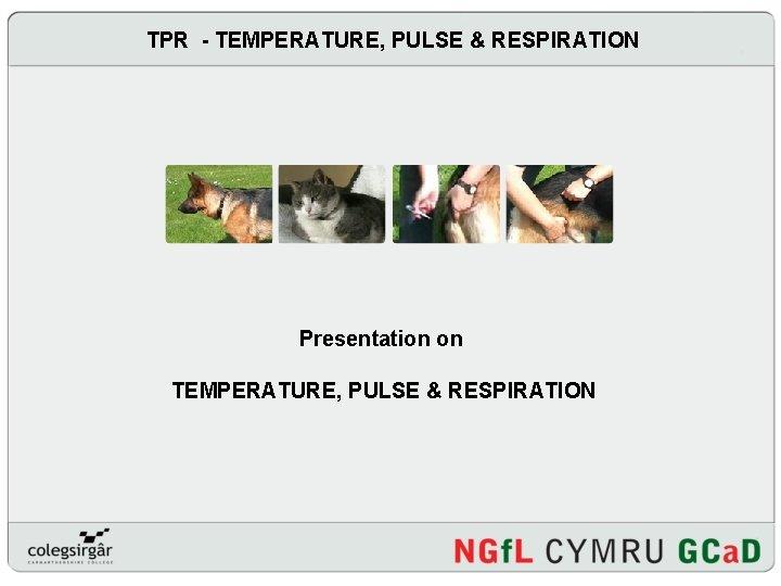 TPR - TEMPERATURE, PULSE & RESPIRATION Presentation on TEMPERATURE, PULSE & RESPIRATION