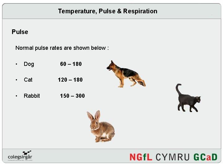 Temperature, Pulse & Respiration Pulse Normal pulse rates are shown below : • Dog
