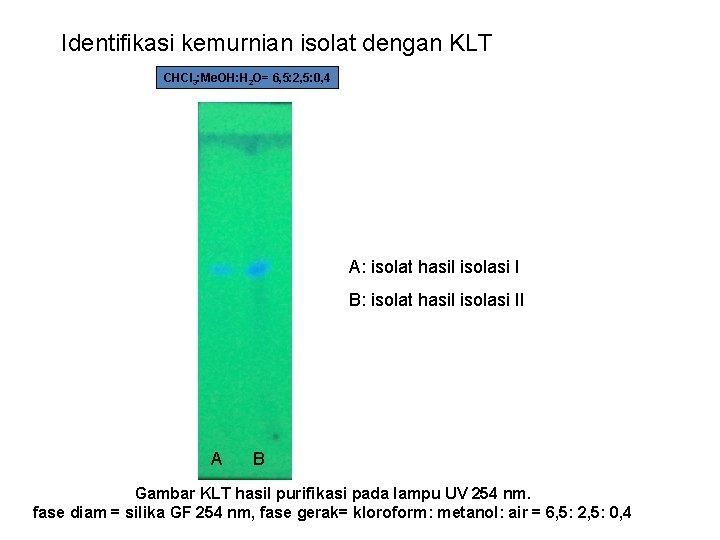 Identifikasi kemurnian isolat dengan KLT CHCl 3: Me. OH: H 2 O= 6, 5:
