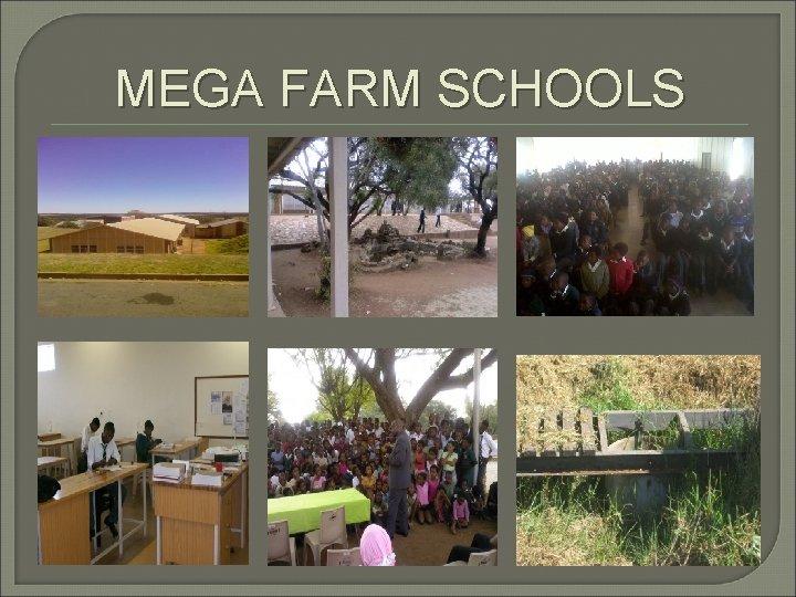 MEGA FARM SCHOOLS