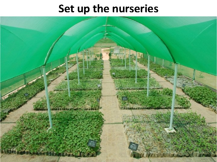 Set up the nurseries B Pakistan State Oil