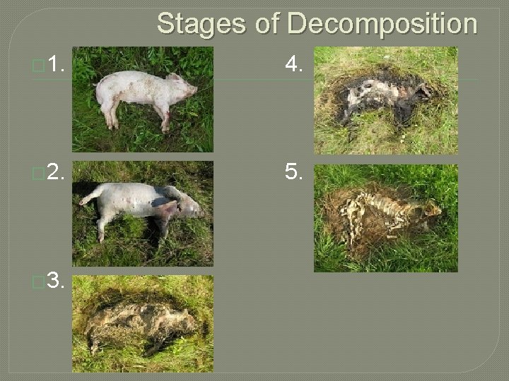 Stages of Decomposition � 1. 4. � 2. 5. � 3.