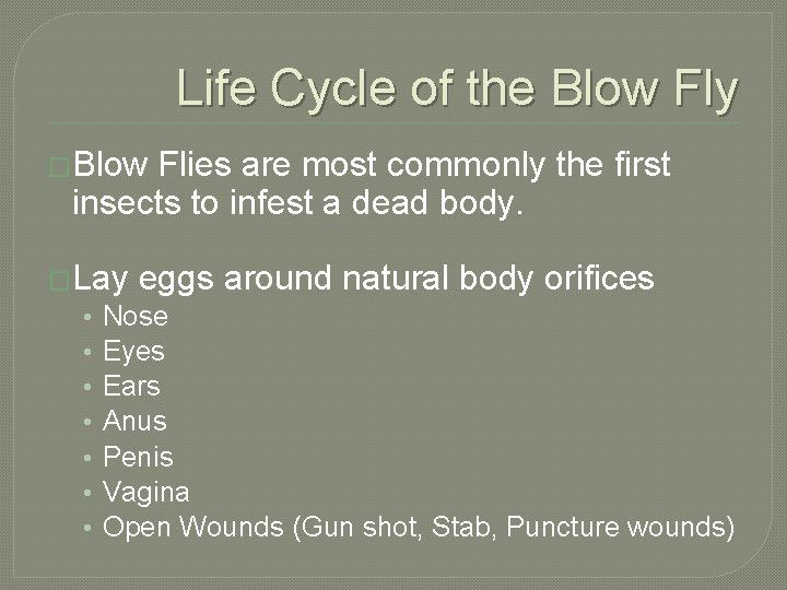 Life Cycle of the Blow Fly �Blow Flies are most commonly the first insects