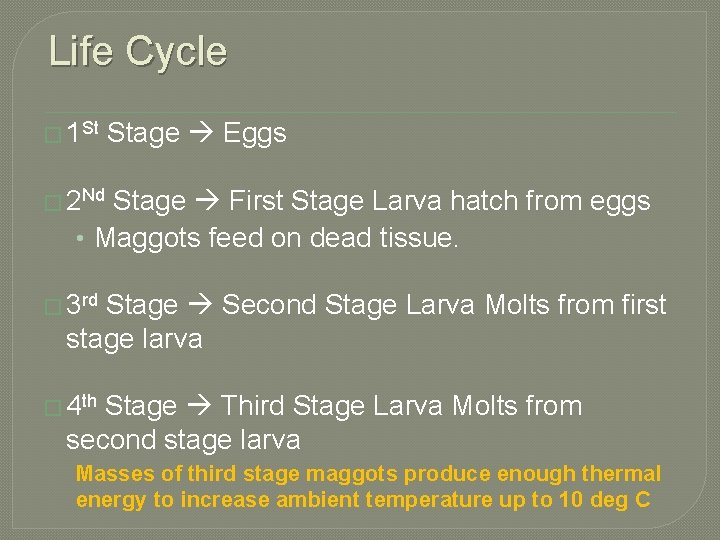 Life Cycle � 1 St Stage Eggs � 2 Nd Stage First Stage Larva
