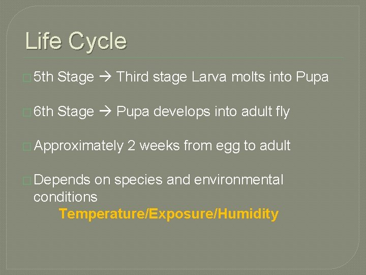 Life Cycle � 5 th Stage Third stage Larva molts into Pupa � 6