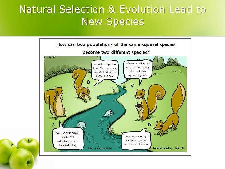 Natural Selection & Evolution Lead to New Species