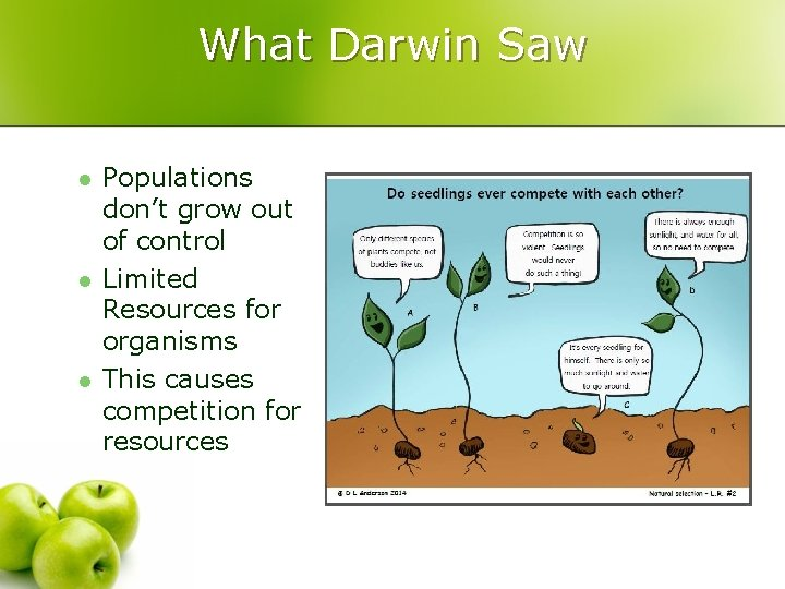 What Darwin Saw l l l Populations don't grow out of control Limited Resources