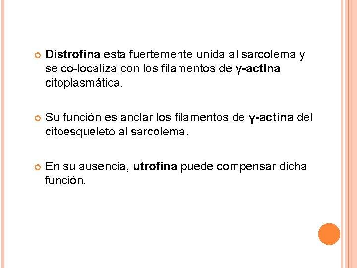 Distrofina esta fuertemente unida al sarcolema y se co-localiza con los filamentos de