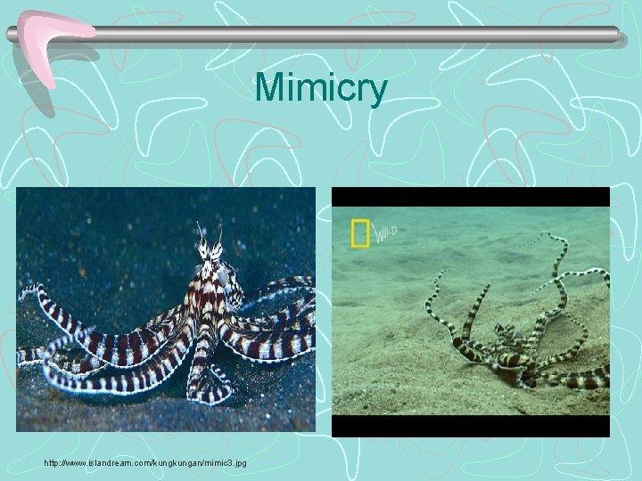 Mimicry http: //www. islandream. com/kungan/mimic 3. jpg