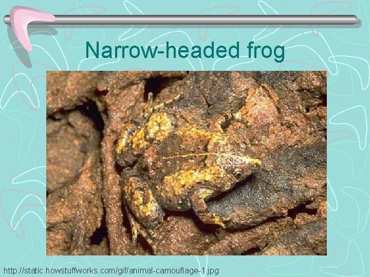Narrow-headed frog http: //static. howstuffworks. com/gif/animal-camouflage-1. jpg