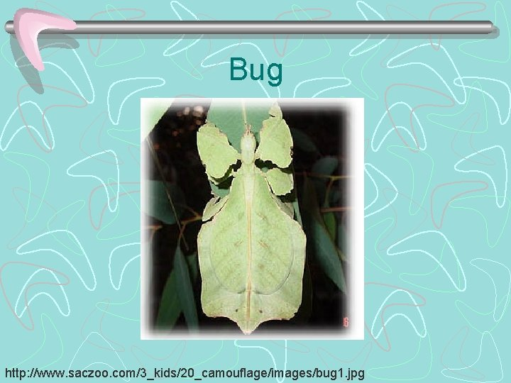 Bug http: //www. saczoo. com/3_kids/20_camouflage/images/bug 1. jpg