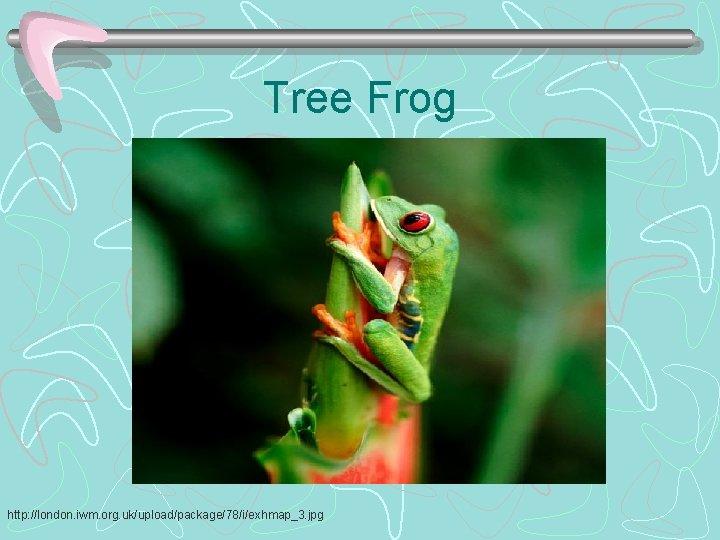 Tree Frog http: //london. iwm. org. uk/upload/package/78/i/exhmap_3. jpg