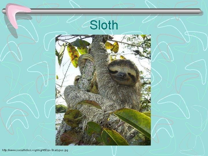 Sloth http: //www. socialfiction. org/img/450 px-Bradypus. jpg