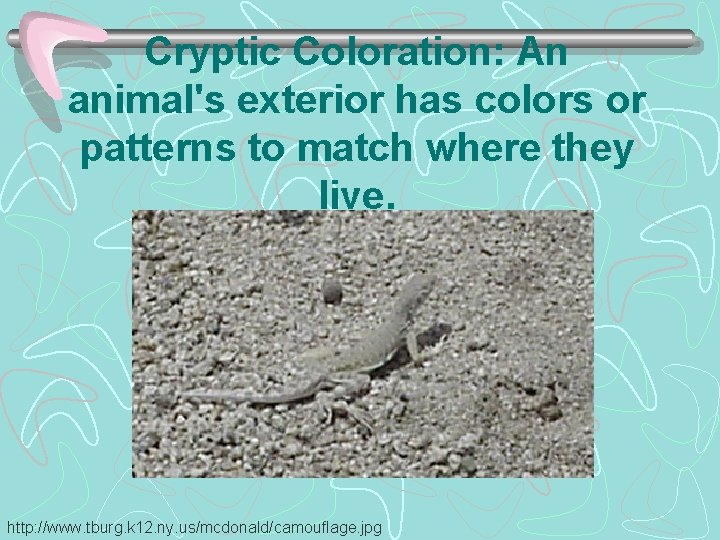 Cryptic Coloration: An animal's exterior has colors or patterns to match where they live.