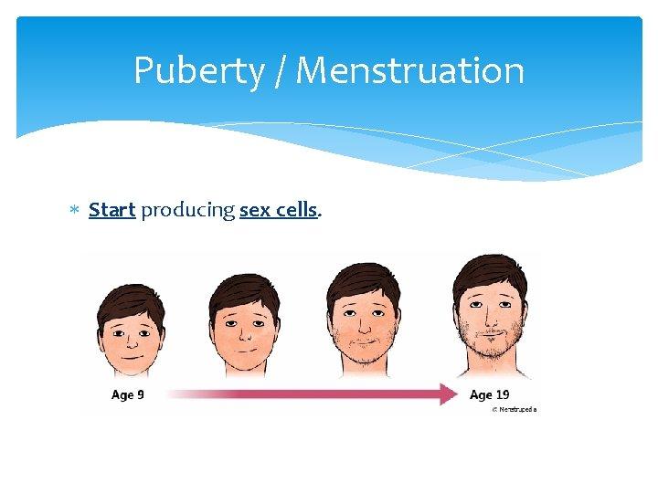 Puberty / Menstruation Start producing sex cells.