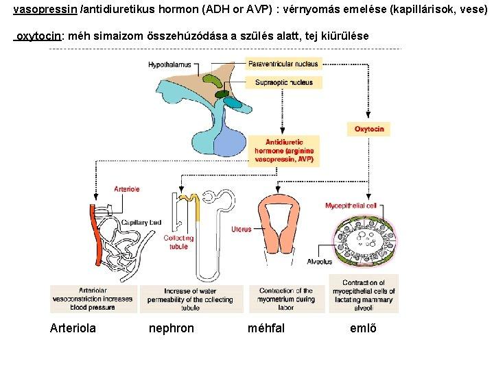 a hipertónia gyakorlása nem megengedett diéta 2 típusú magas vérnyomás esetén