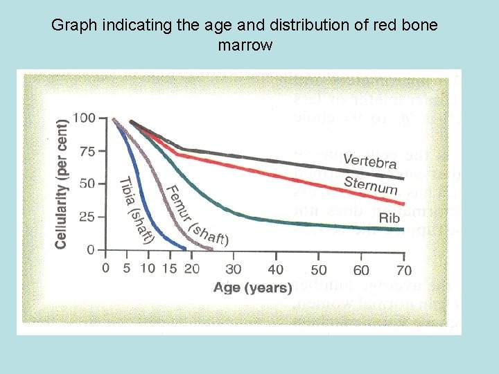 Graph indicating the age and distribution of red bone marrow