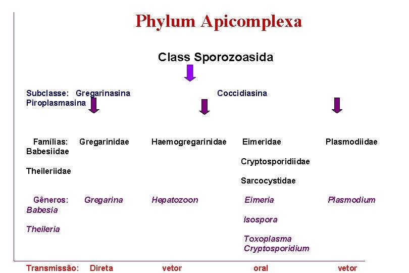 apicomplexes paraziták