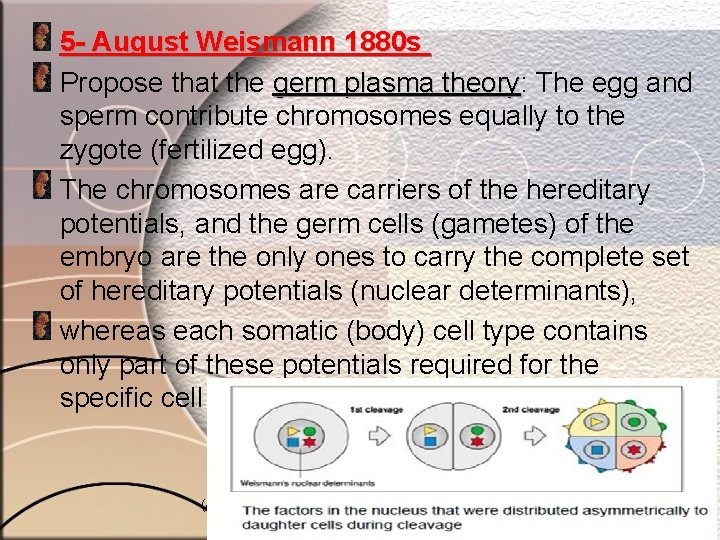 5 - August Weismann 1880 s Propose that the germ plasma theory: theory The