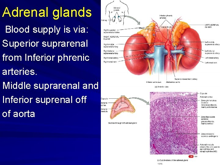 Adrenal glands Blood supply is via: Superior suprarenal from Inferior phrenic arteries. Middle suprarenal