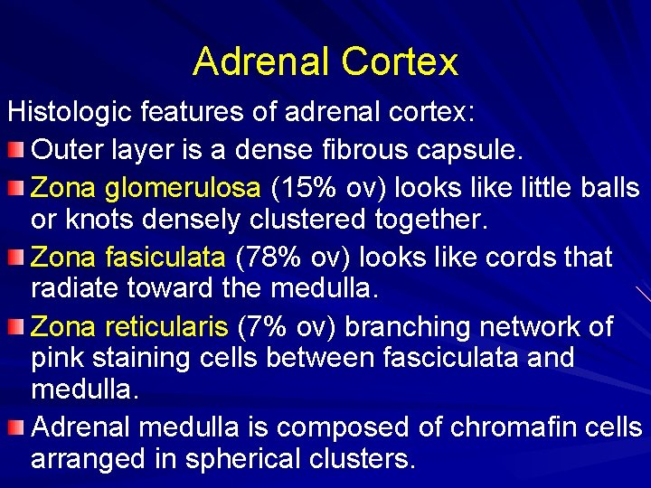 Adrenal Cortex Histologic features of adrenal cortex: Outer layer is a dense fibrous capsule.
