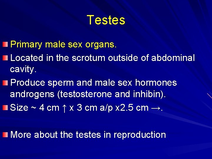 Testes Primary male sex organs. Located in the scrotum outside of abdominal cavity. Produce