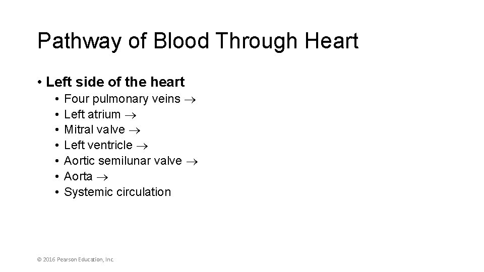 Pathway of Blood Through Heart • Left side of the heart • • Four