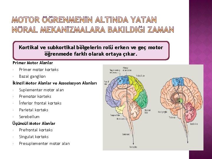 Kortikal ve subkortikal bölgelerin rolü erken ve geç motor öğrenmede farklı olarak ortaya çıkar.