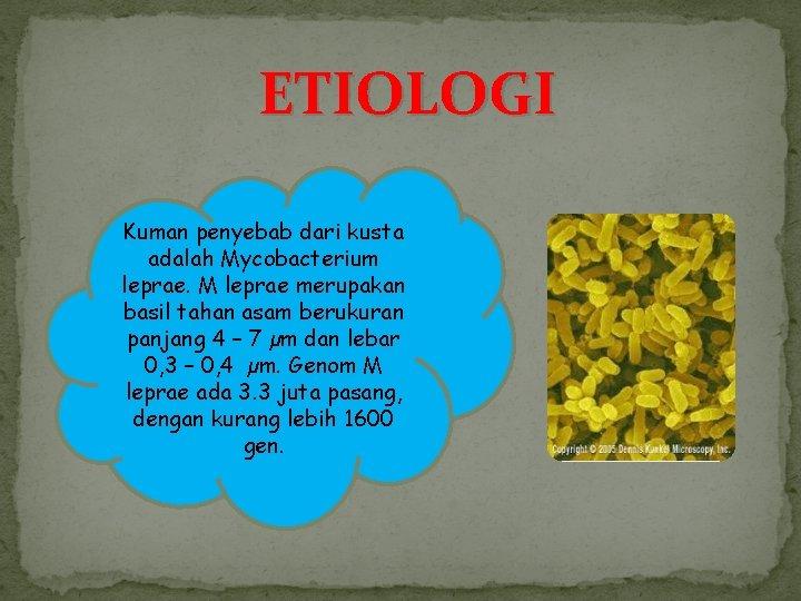 ETIOLOGI Kuman penyebab dari kusta adalah Mycobacterium leprae. M leprae merupakan basil tahan asam