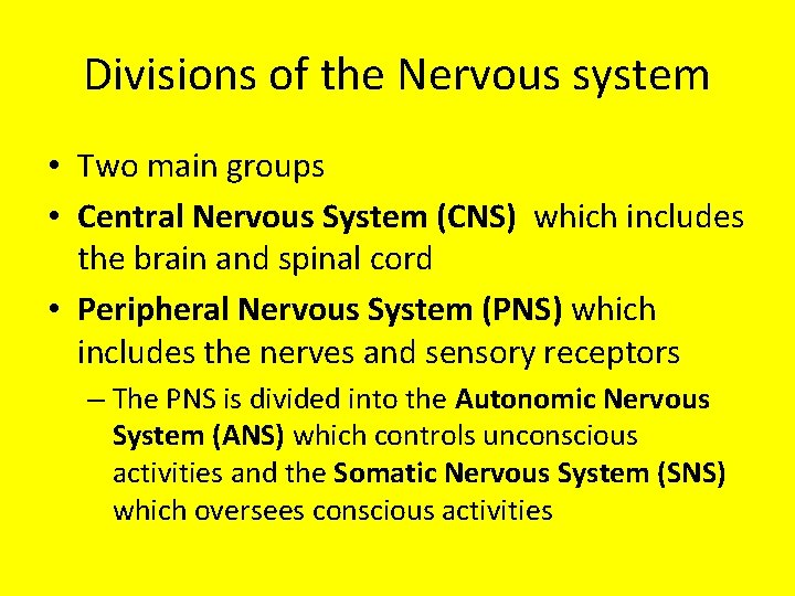 Divisions of the Nervous system • Two main groups • Central Nervous System (CNS)