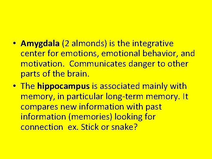 • Amygdala (2 almonds) is the integrative center for emotions, emotional behavior, and