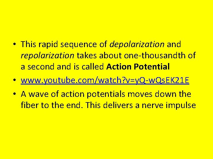 • This rapid sequence of depolarization and repolarization takes about one-thousandth of a