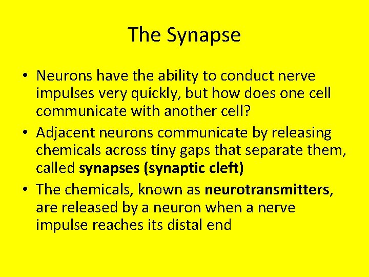 The Synapse • Neurons have the ability to conduct nerve impulses very quickly, but