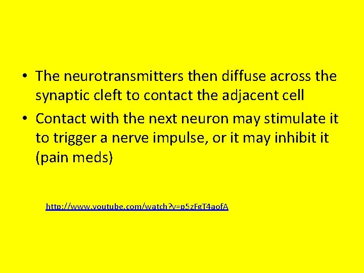 • The neurotransmitters then diffuse across the synaptic cleft to contact the adjacent