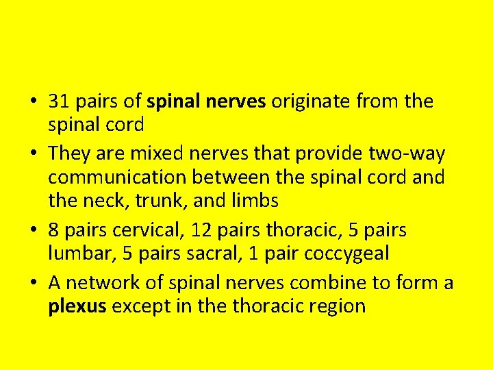 • 31 pairs of spinal nerves originate from the spinal cord • They